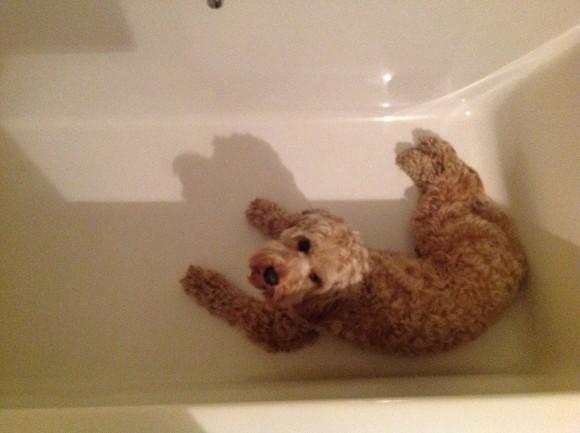 Image Result For Dog Bathroom Training