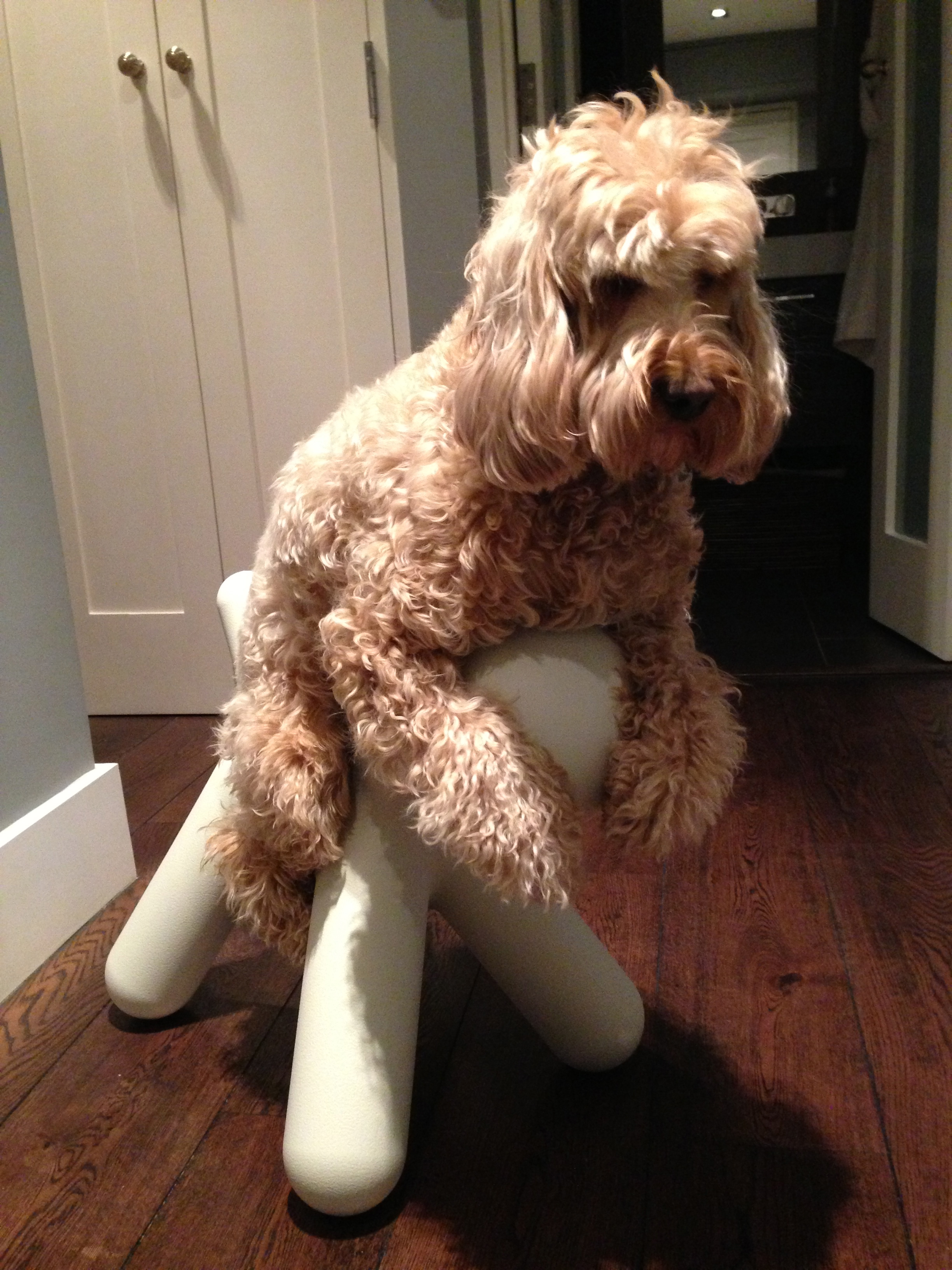 Magis Puppy Chair Archives Miss Darcy S Adventures