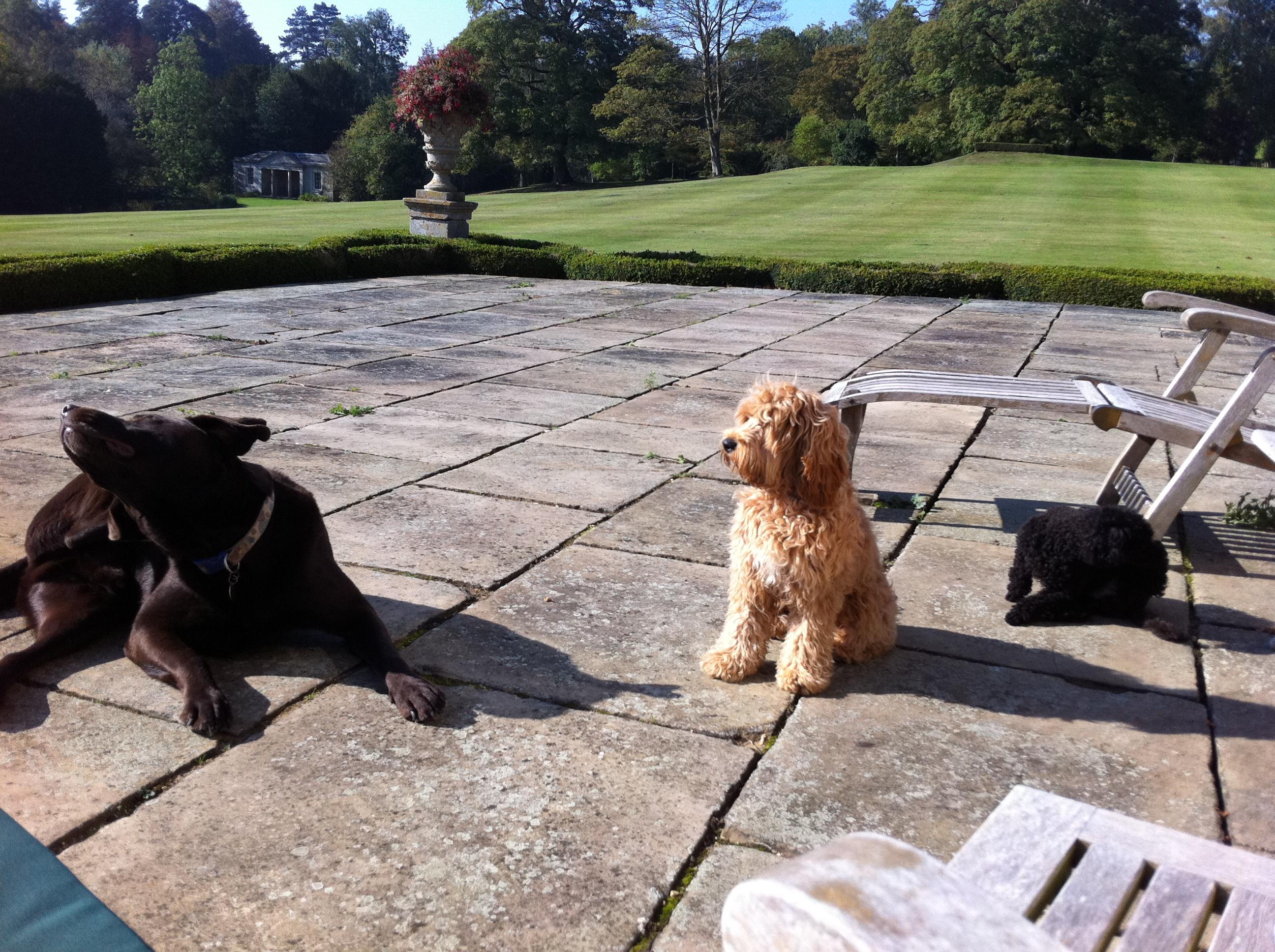 Dog Friendly Weekends Winterton N Sea