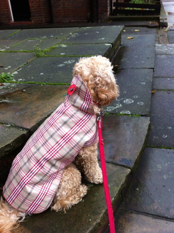 Burberry Dog Coat For Sale Uk