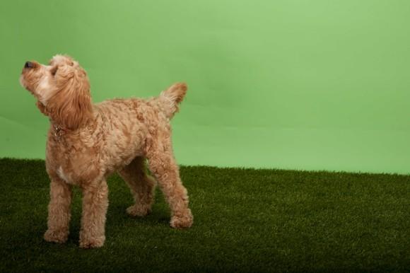 Dog Grooming Deal Birmingham