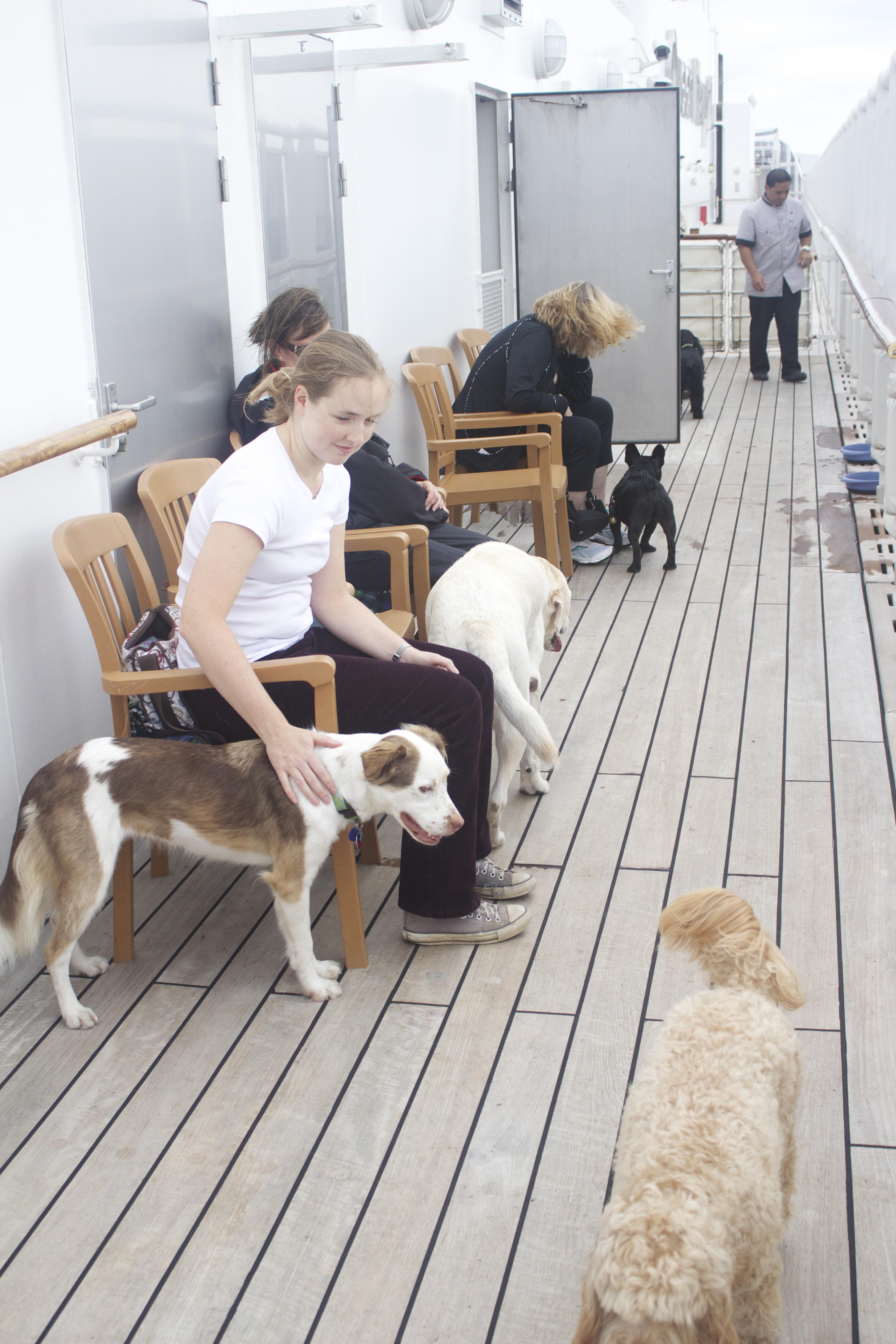 Dog Kennels For Sale Online