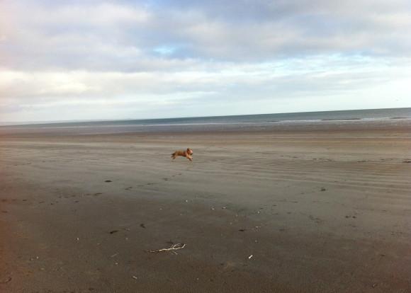 Dog Friendly Walks St Andrews