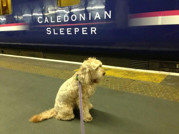 Image Result For Dog Training Scotland