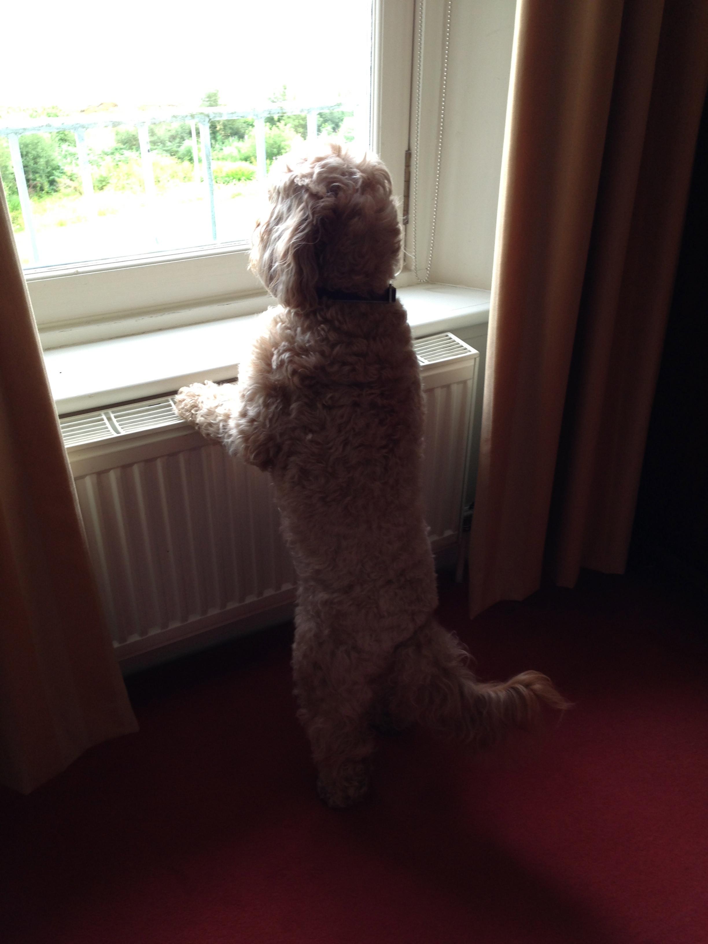 Macdonald Dog Training Birmingham Al