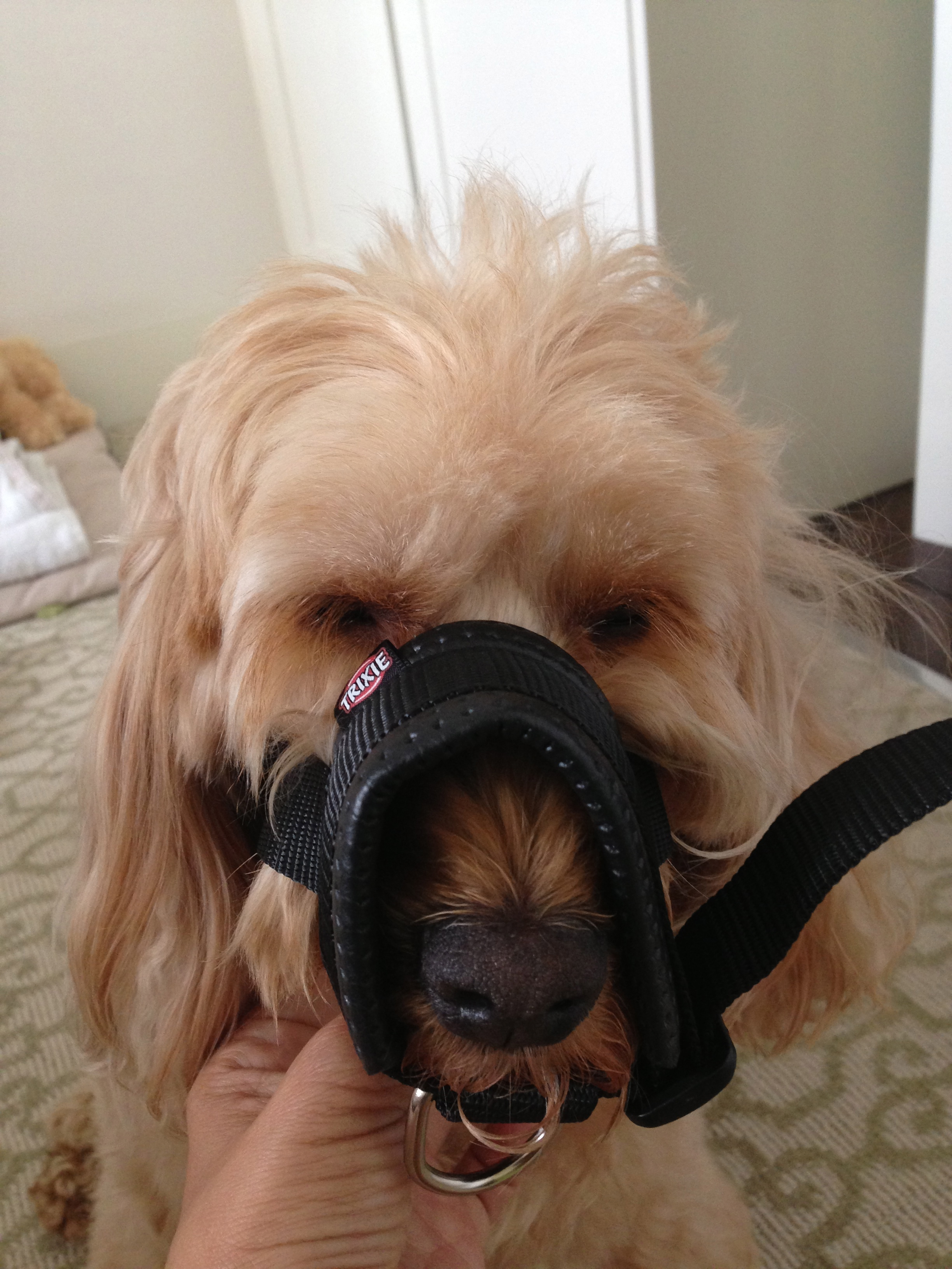 Image Result For Trixie Dog Training