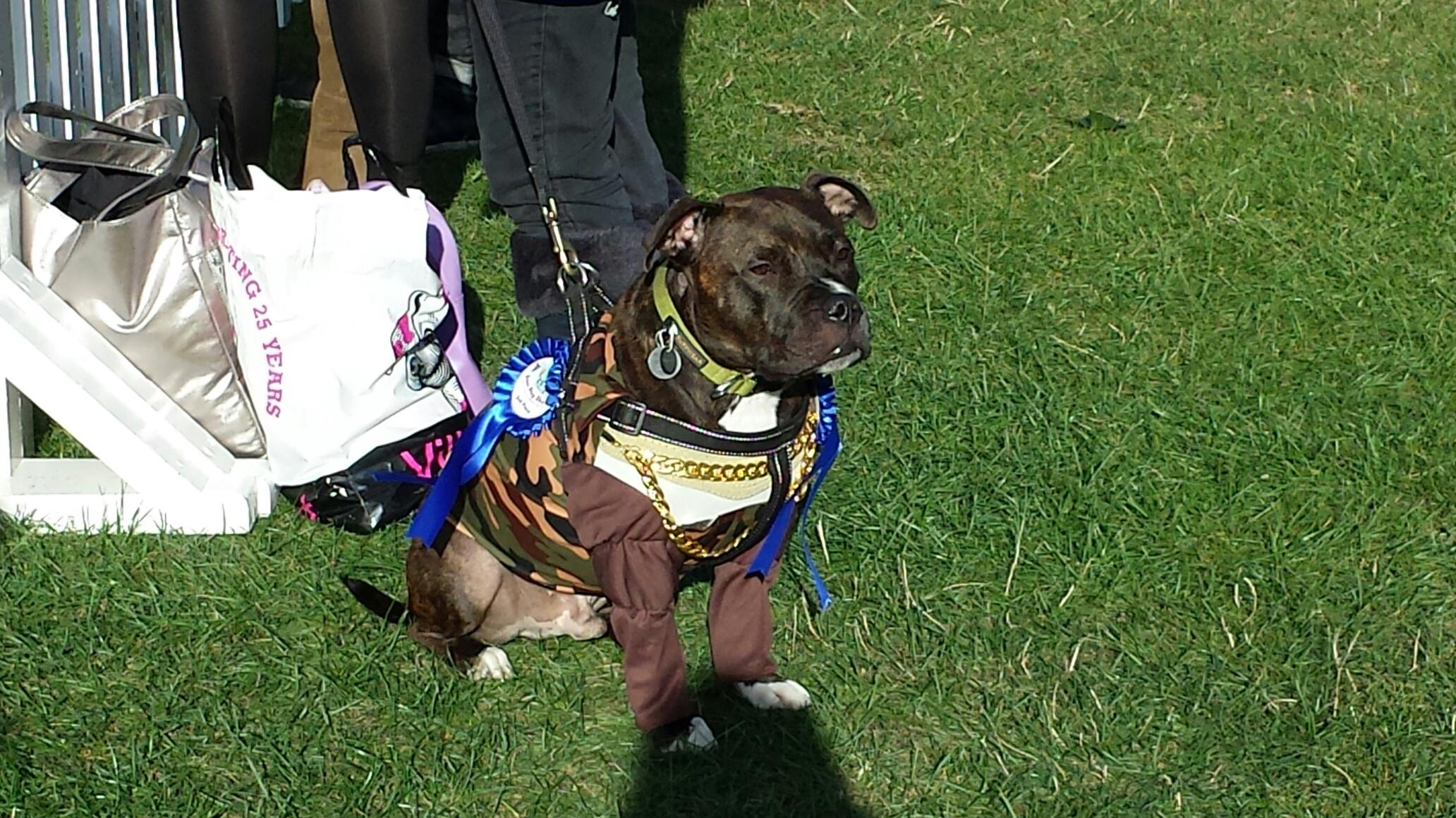 Primrose Hill Dog Show May