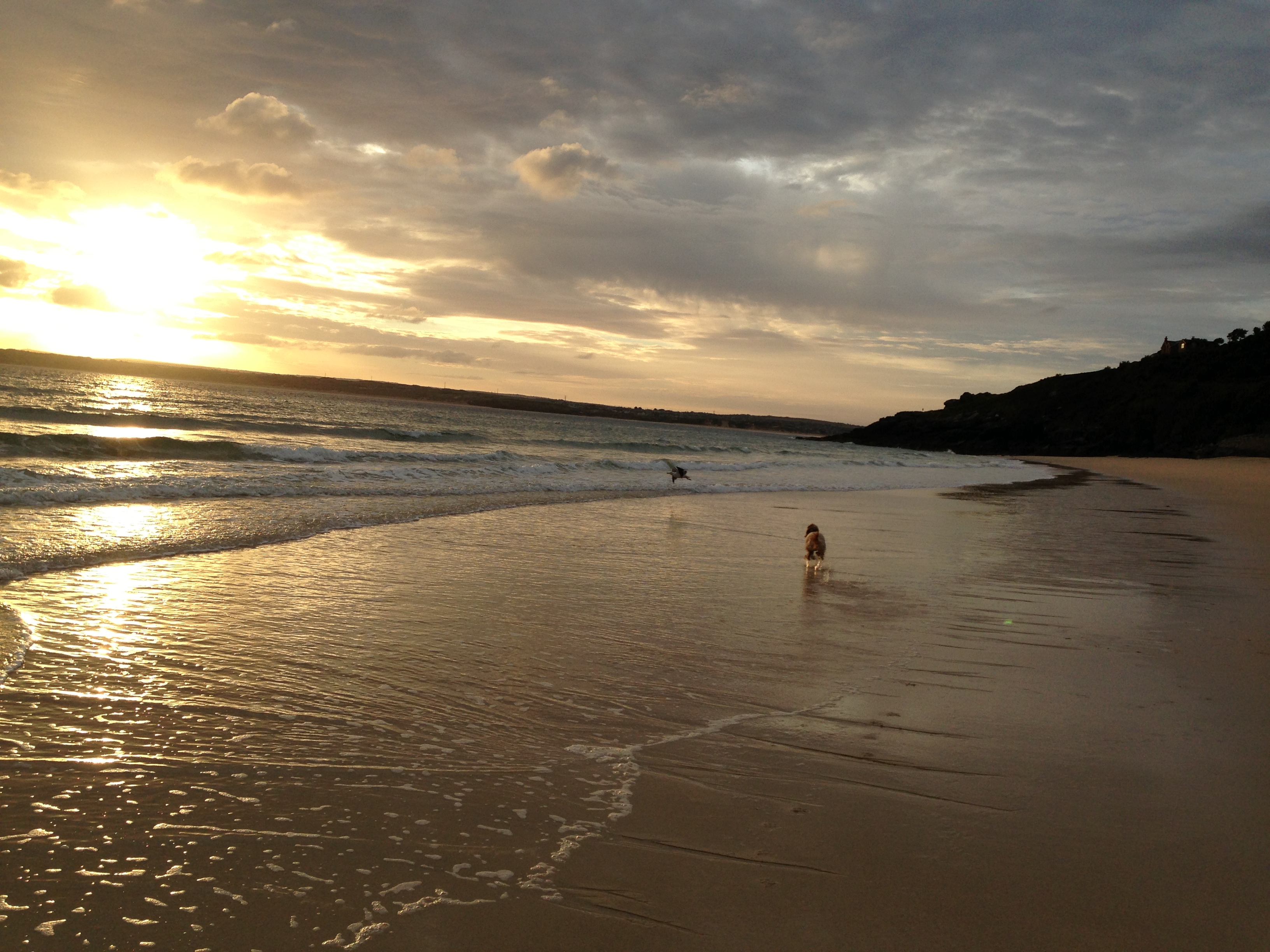 Dog Friendly Beach Camping Brisbane