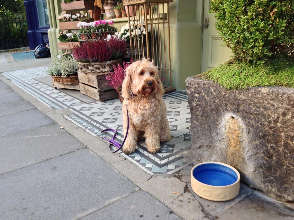 Dog Grooming Gloucester Nj Coupon