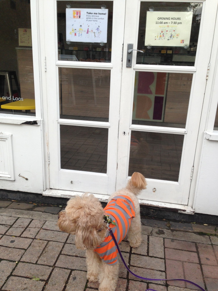 Dog Friendly Ice Cream Shop Near Me