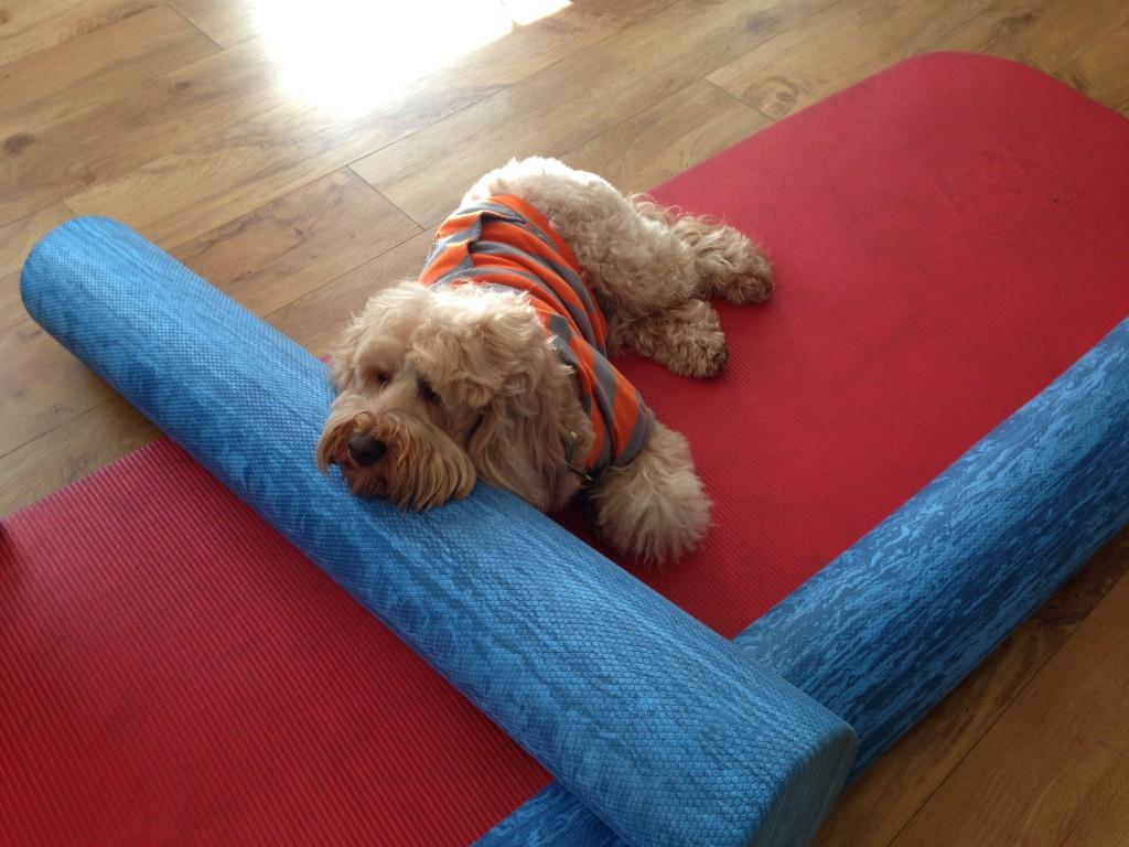Dog Treadmills For Sale Canada