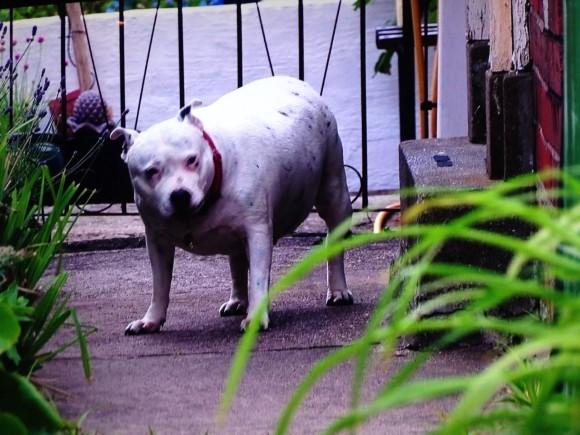 Rspca Dog Training Classes