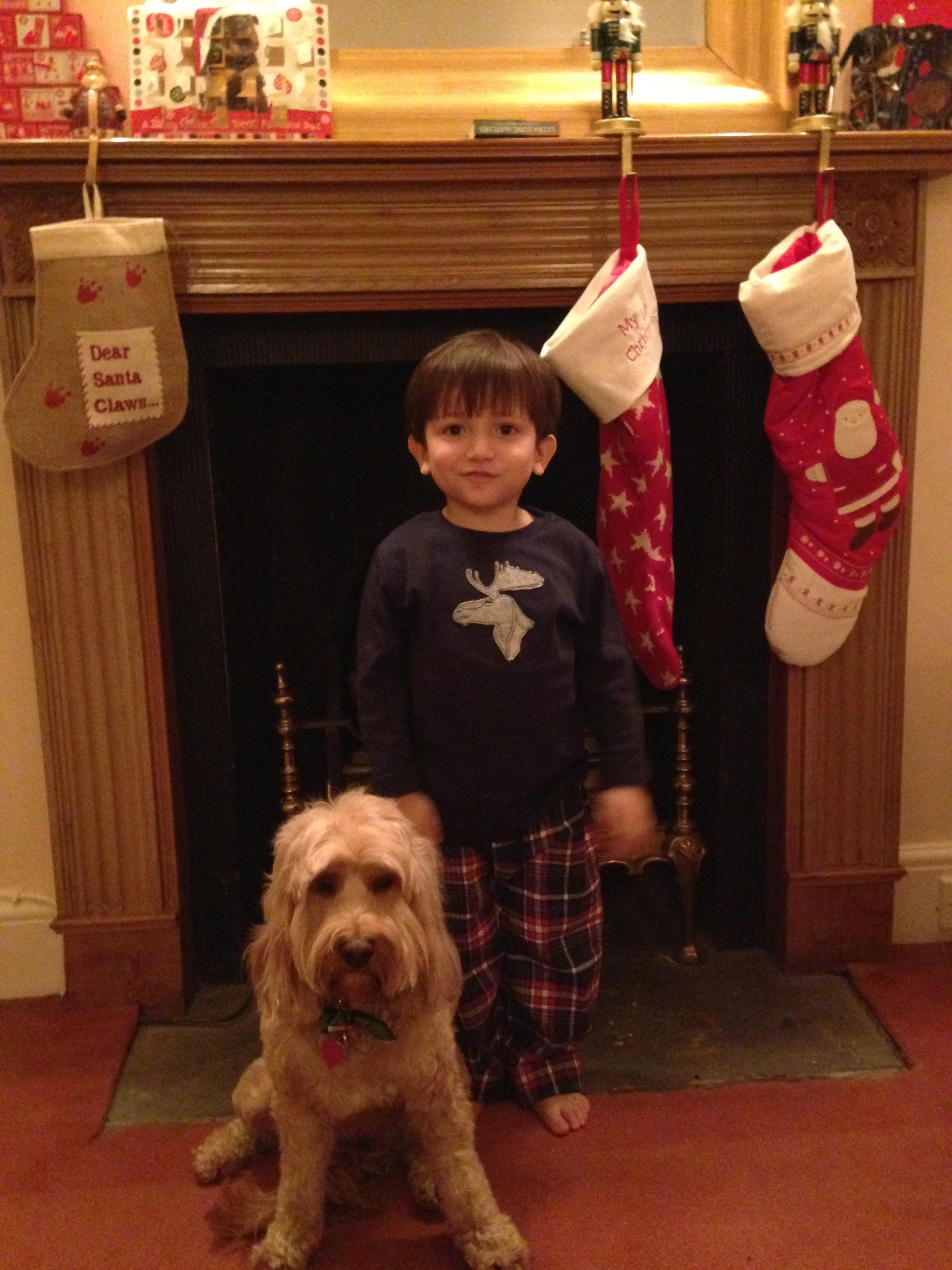 Dog Walks Christmas Day Southampton