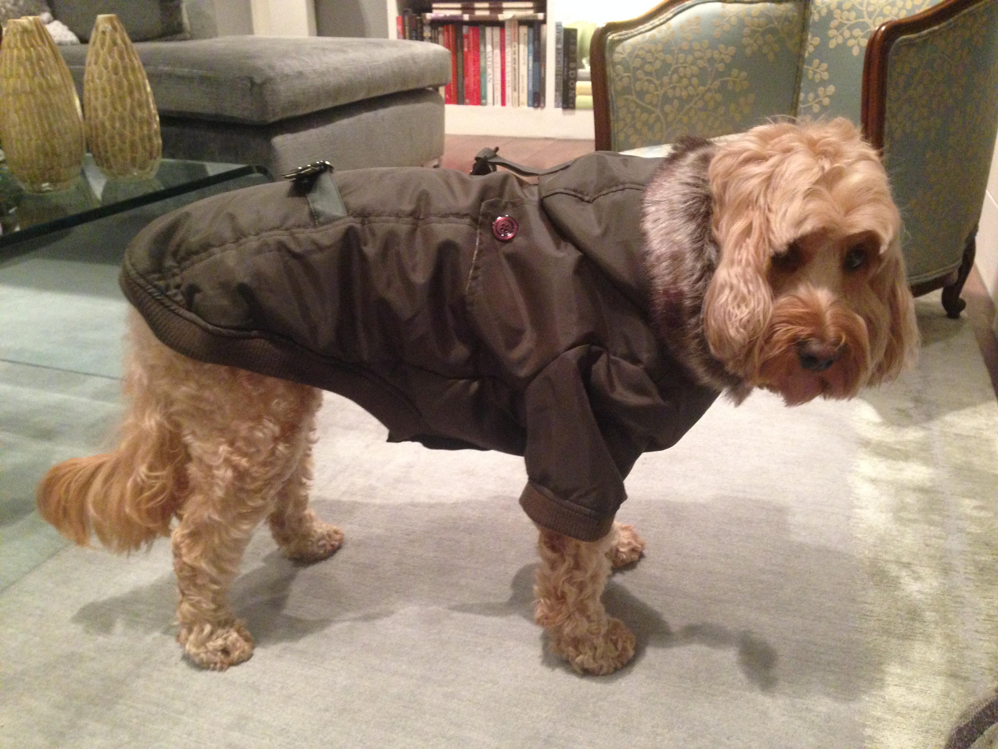 Dog Grooming Clothing Uk Plus Size