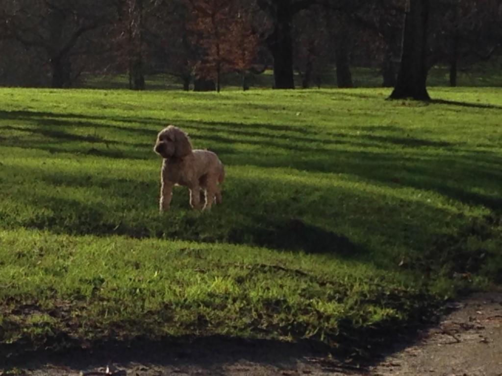 Dog Friendly Apple Picking Nj
