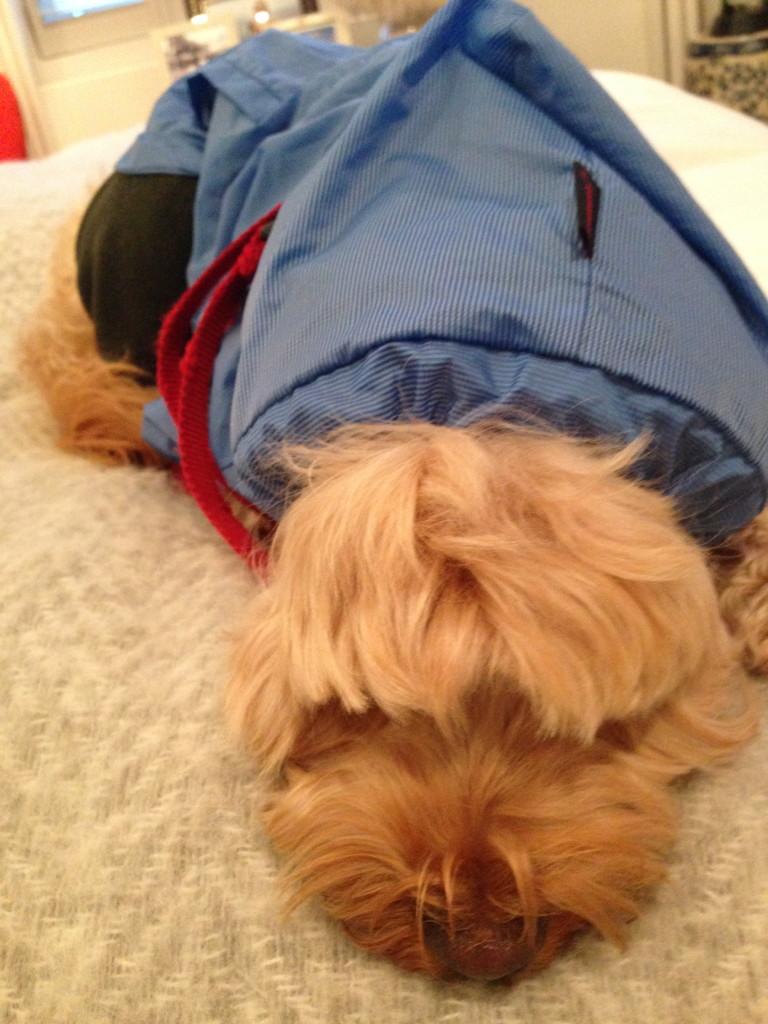 Dog Training Pads Or Outside