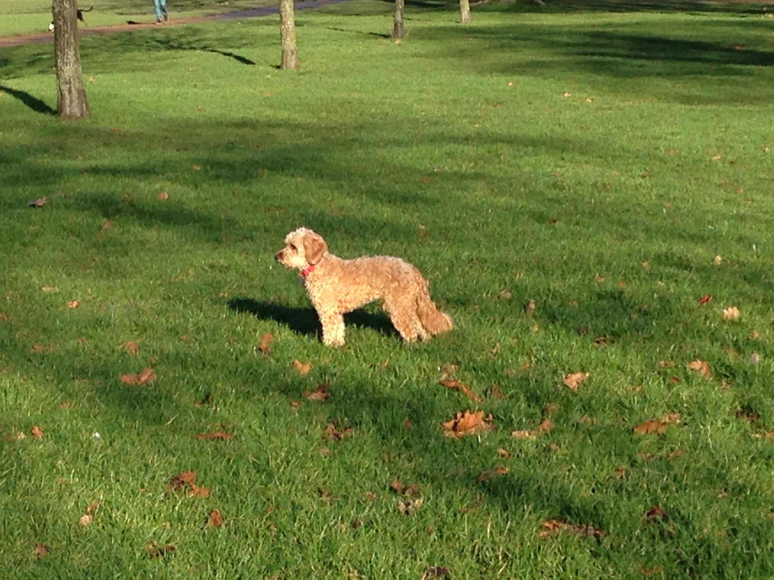 Dog Friendly Walks In Boise