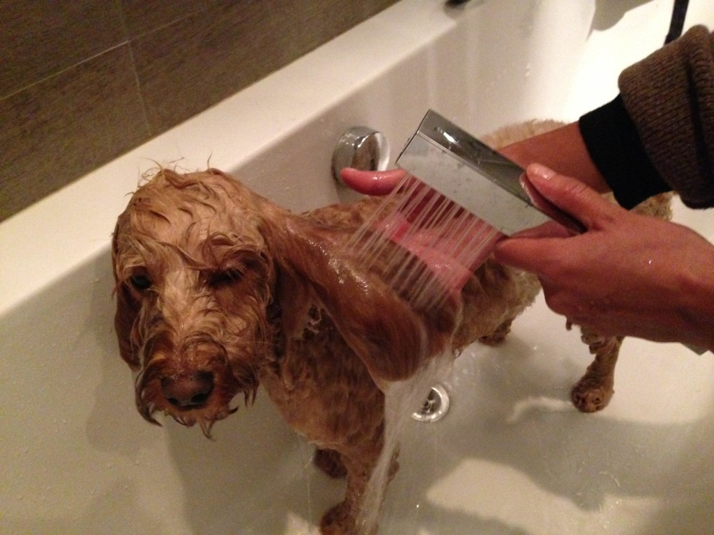 Dog Grooming Blow Dryer