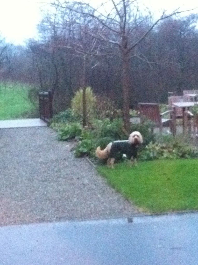 Image Result For Dog Training Grove