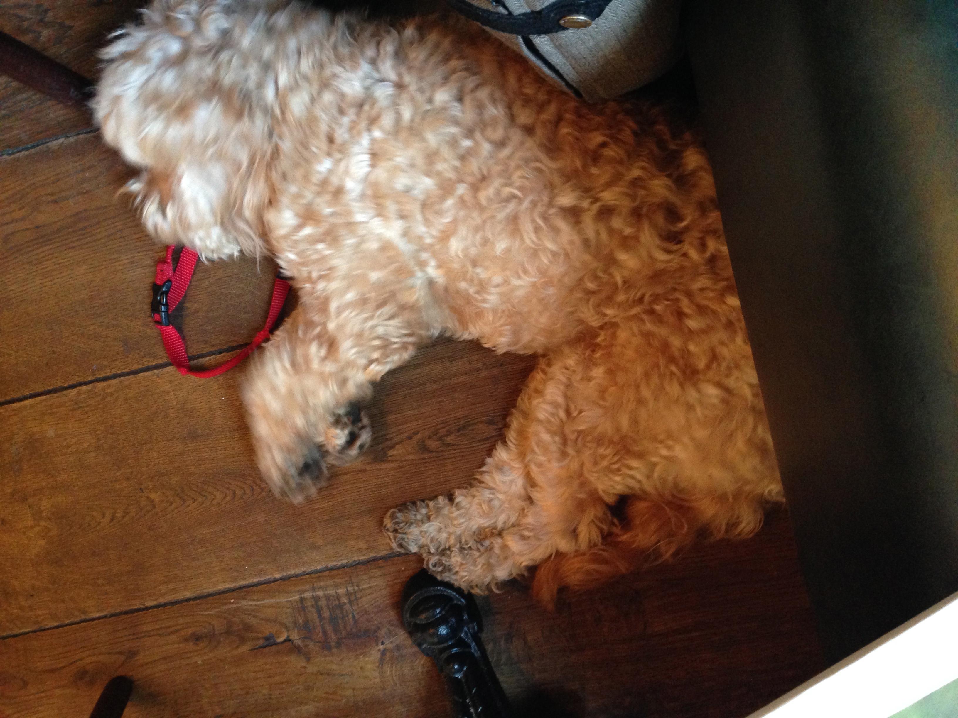 Gastro Dog Food For Inflamatory Bowel Disease