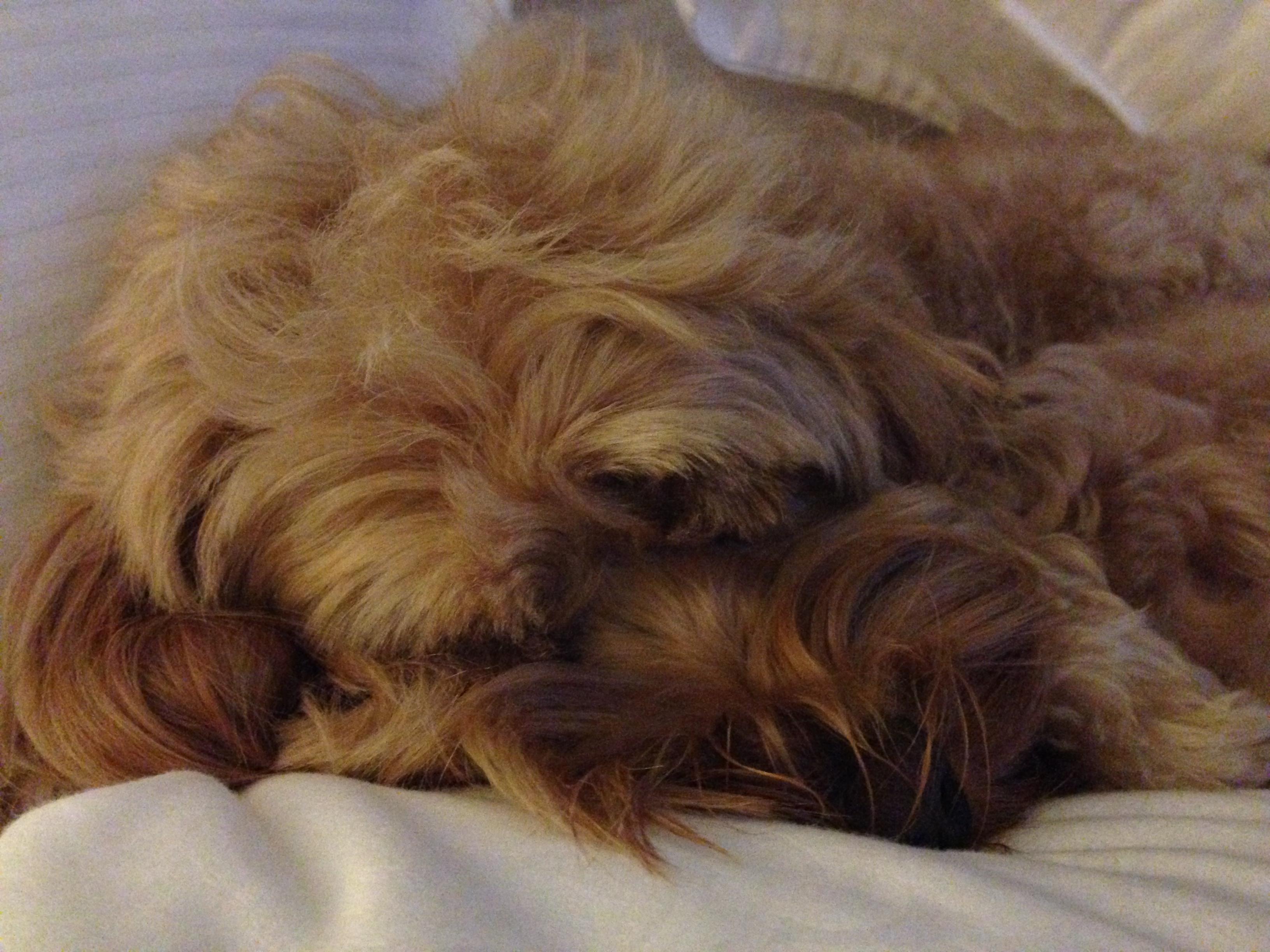 Dog Grooming Suffolk