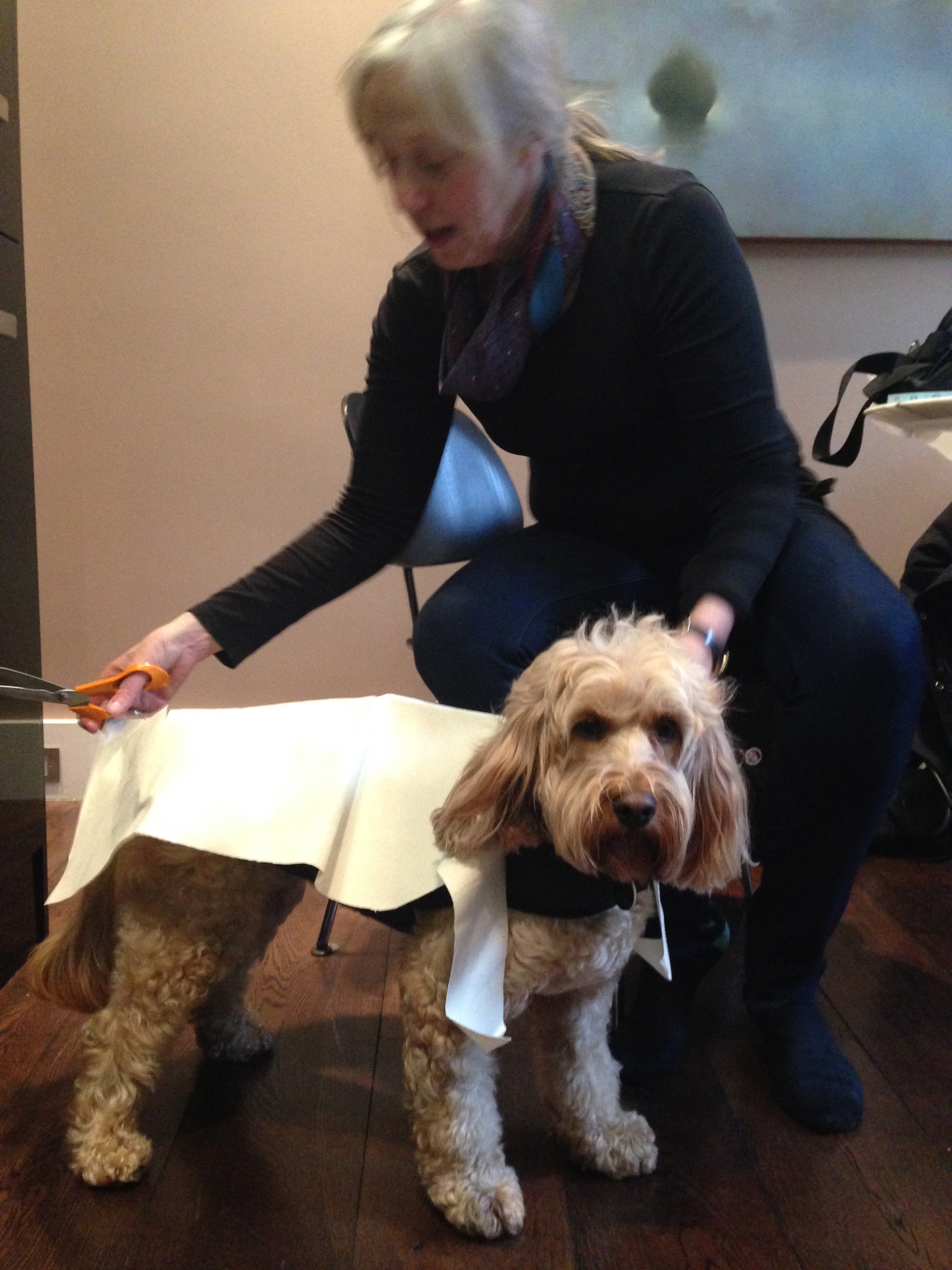 Dog Grooming Job Sseek