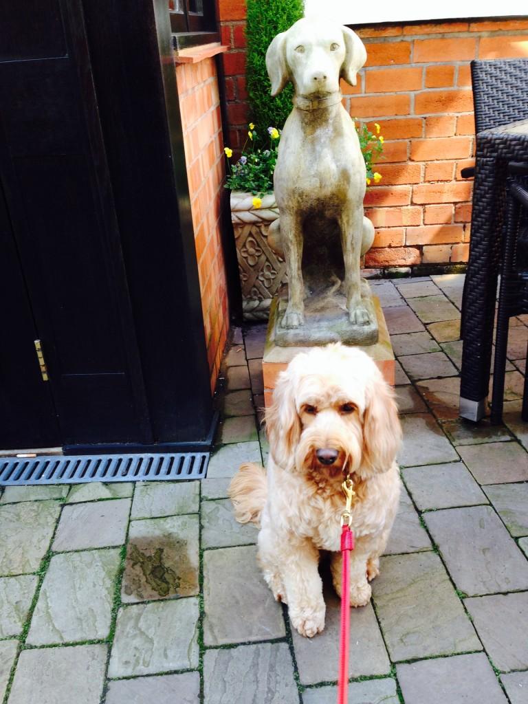 Dog Walks Near Stratford Upon Avon