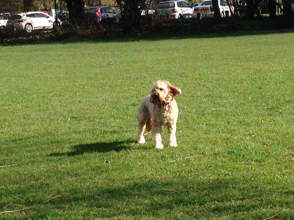 Stratford Dog Park Pei
