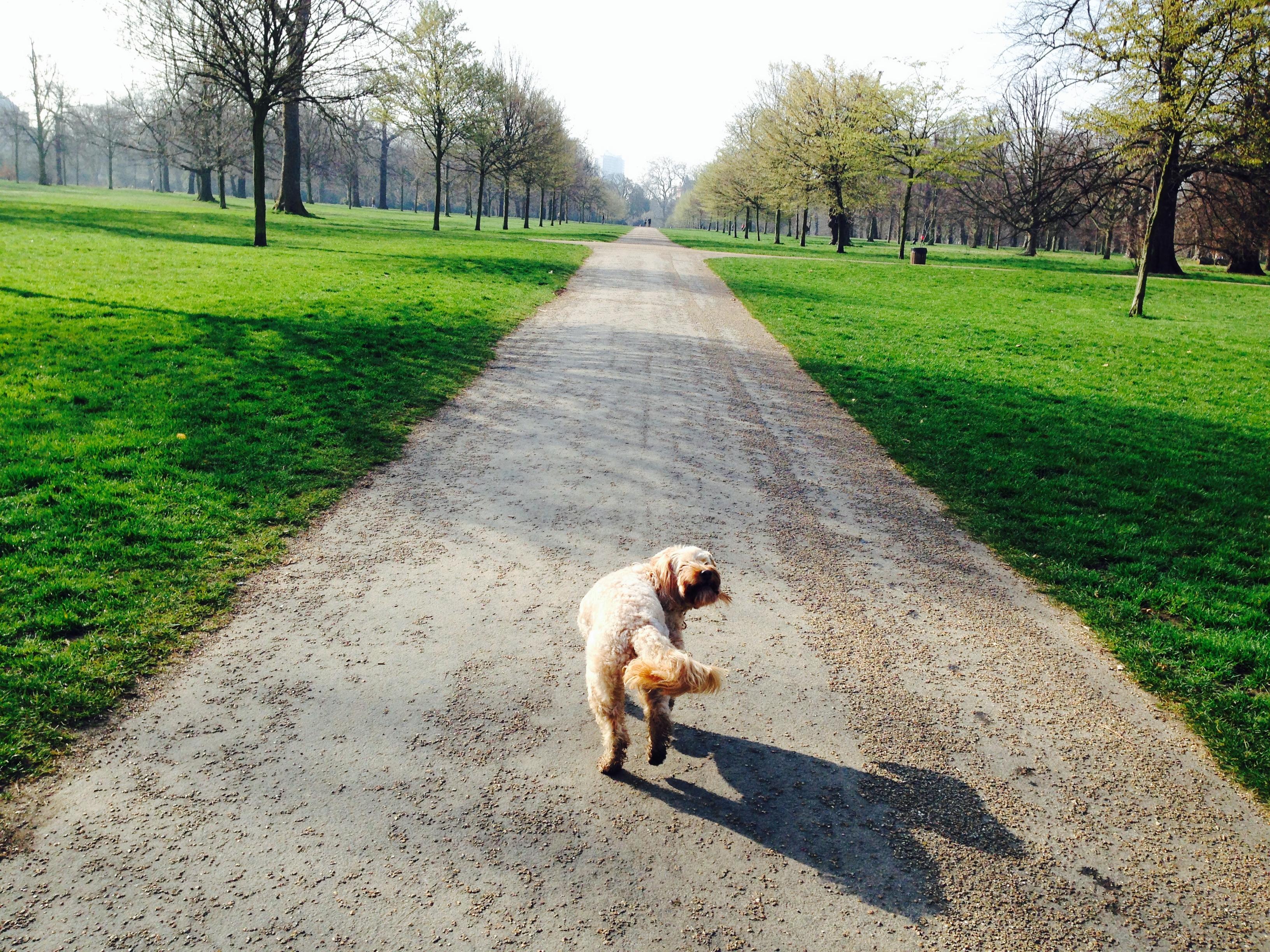 Sunshine Dog Training Council Bluffs Ia