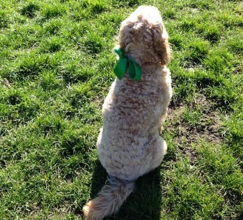 Patrick Wong Dog Training Review