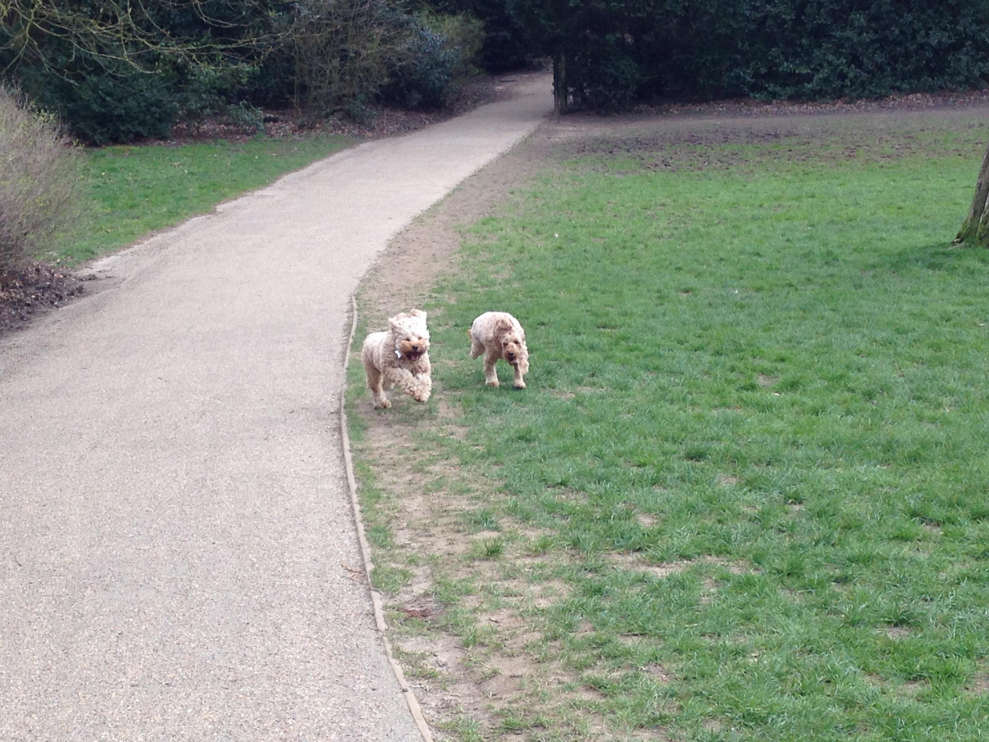 Image Result For Dog Training Hampstead
