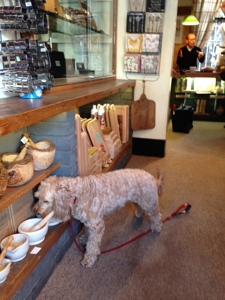 Dog Friendly Stores Dayton Ohio