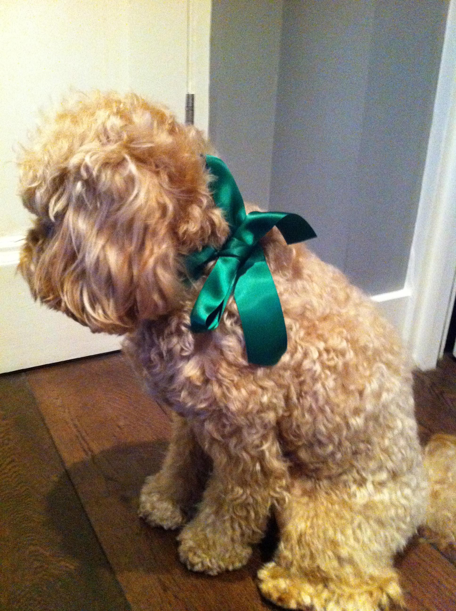 Green Dog Grooming Albany Ny