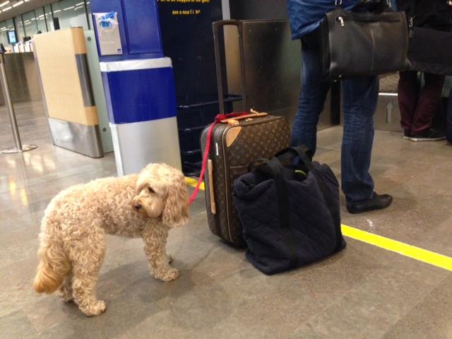 Dog Boarding Vass Nc