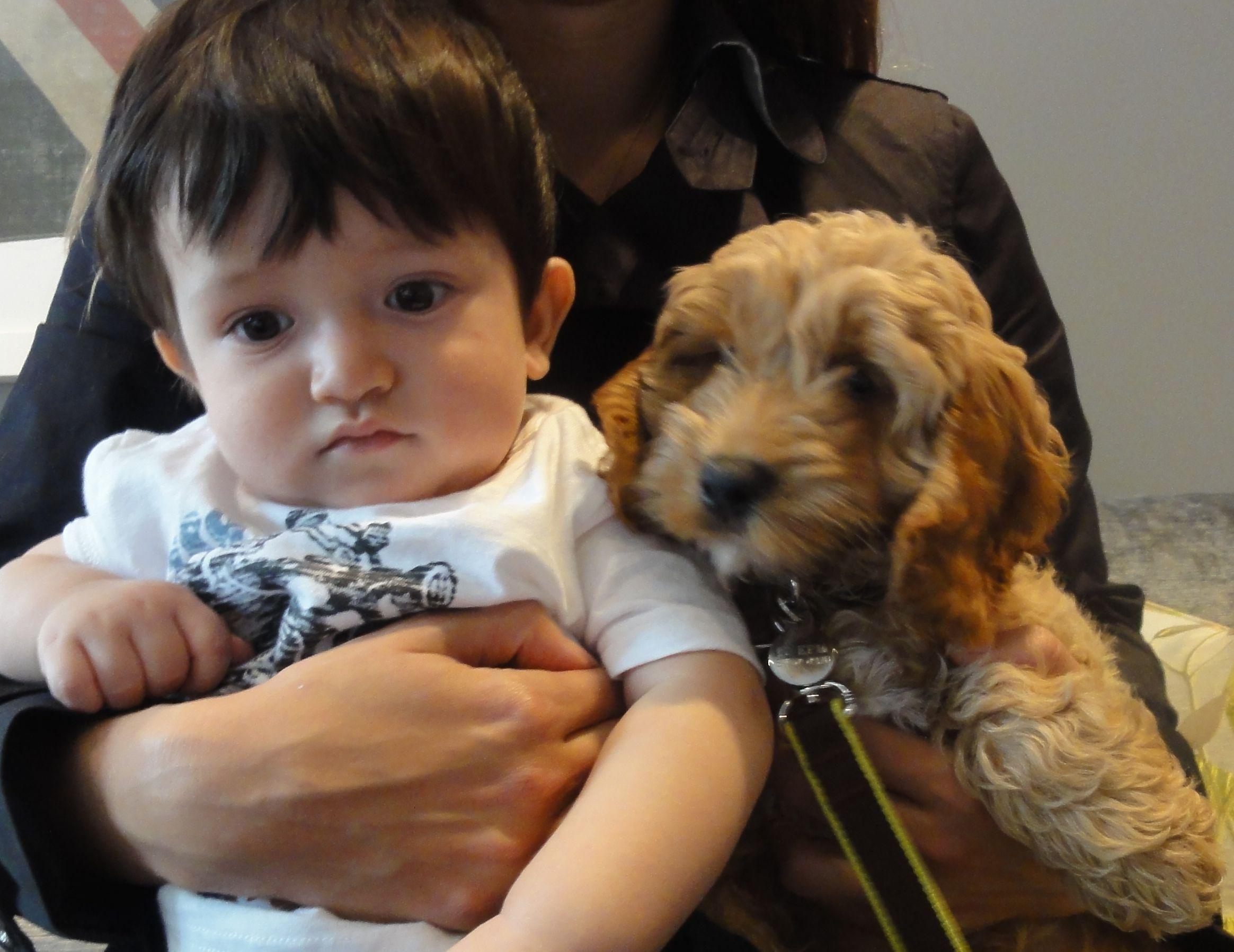 Little Chubby Dog Breeds