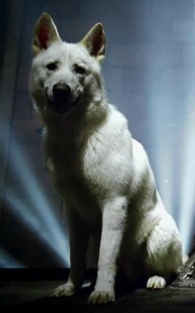 Direwolves - Ghost fantome ...