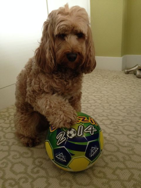 let the ball roll