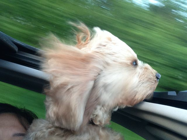 Image Result For Dog Twitching Can