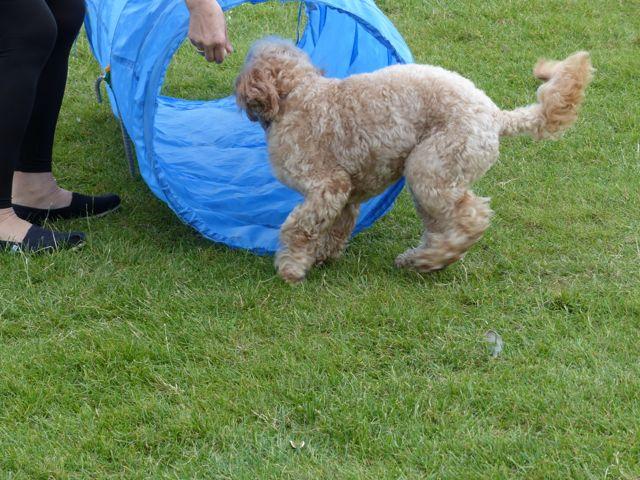 Dog Walks Round Caridff