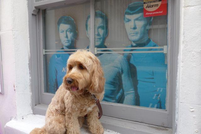 Dog Grooming Brighton Victoria