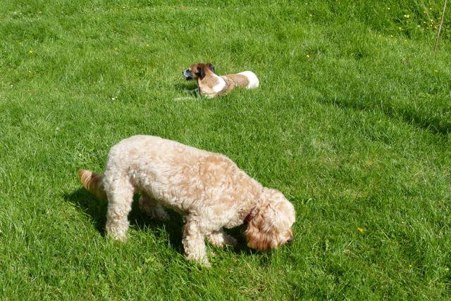 Dog Training Distance Errodes Compliance