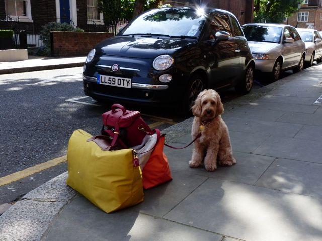 Dog Training Buckinghamshire