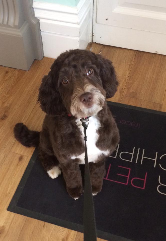 Cheltenham Dog Friendly