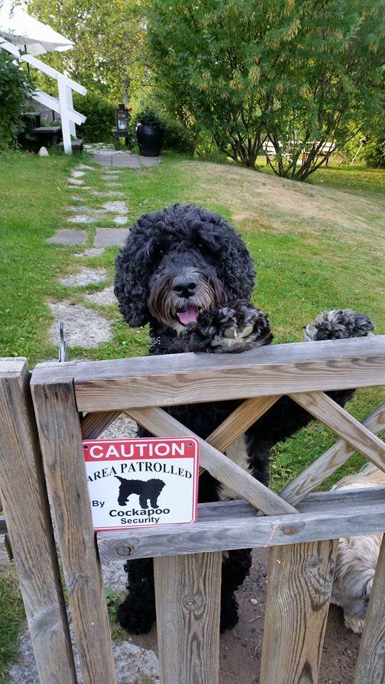 Dog Jumps Up At Strangers On Walks