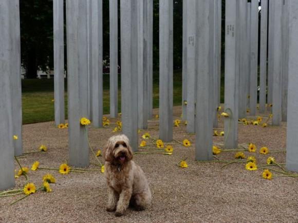 Dog Park Bid Barnstable Ma