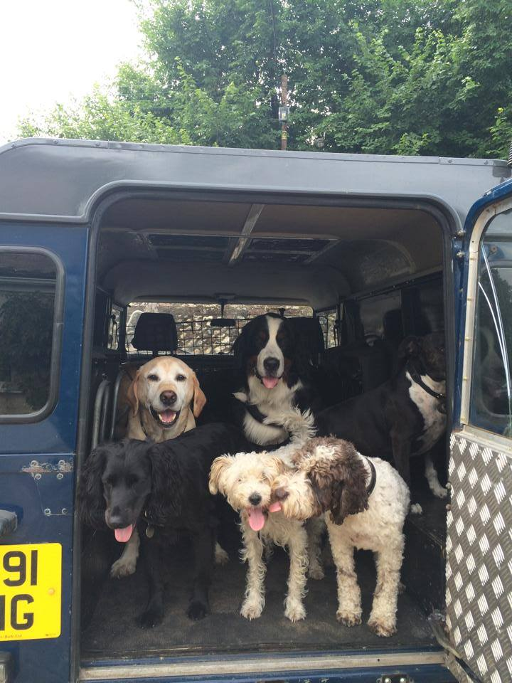 Dog Friendly Holidayd On Angelsey Wales