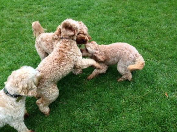 Image Result For Dog Training Monroe