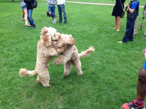 Dog Grooming Monroe Township Nj
