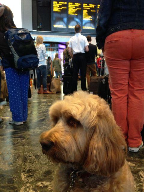 Tamworth Dog Friendly Accom Airbnb