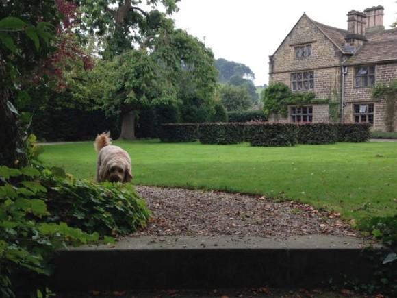 Dog Friendly Hotels In Somerset Uk